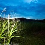 Grass & Sky - Fotograf Peter Lindberg Göteborg